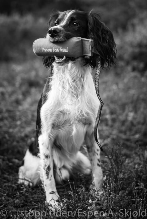 m2401828-crane-beste-hund