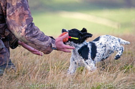 _AAB8384AndrewRobinsonspup