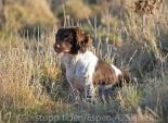 _AAB8604 FTCh Boundarymoor Pearl