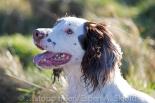 _AAB8729 Colcourt Sparky of Boundarymoor