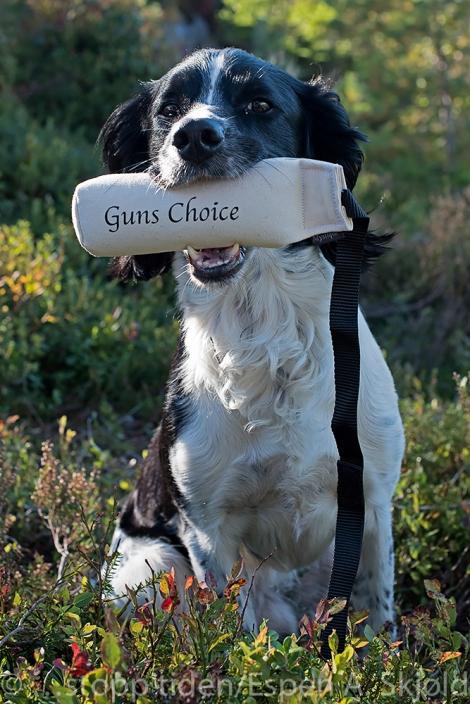_D812543 Crane Guns Choice