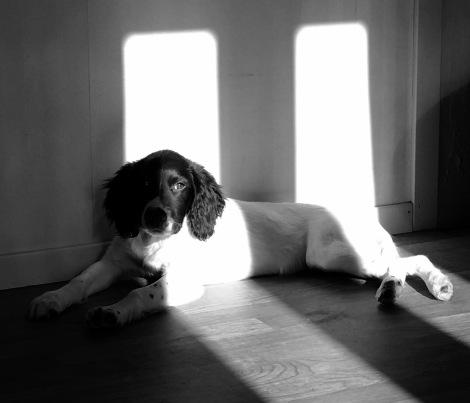 Hazel i solen